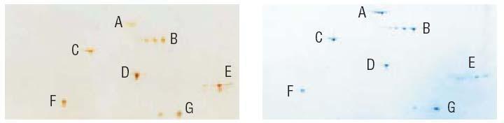 蛋白分子量标准