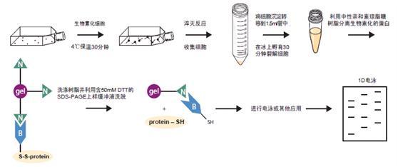 细胞表面蛋白分离试剂盒