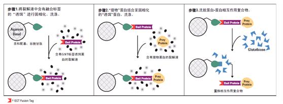 纯化与包含谷胱甘肽s-转移酶(gst)融合标签重组蛋白