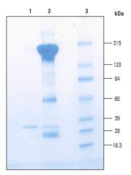 交联免疫沉淀试剂盒