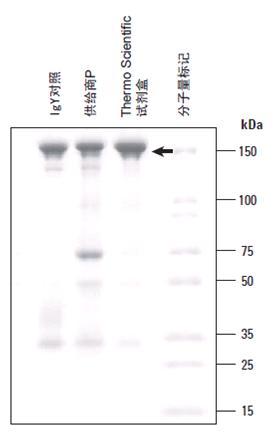 抗体生产与纯化产品