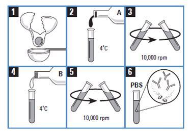 抗体生产与纯化产品 抗体纯化产品
