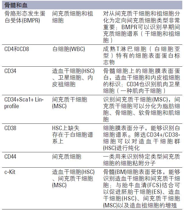 免疫荧光和免疫组织化学